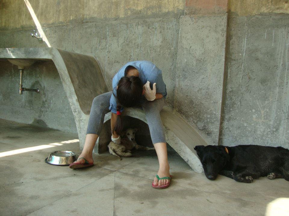 Archioppteryx-architects-puppy-pen-shelter-noida-india-SPCA