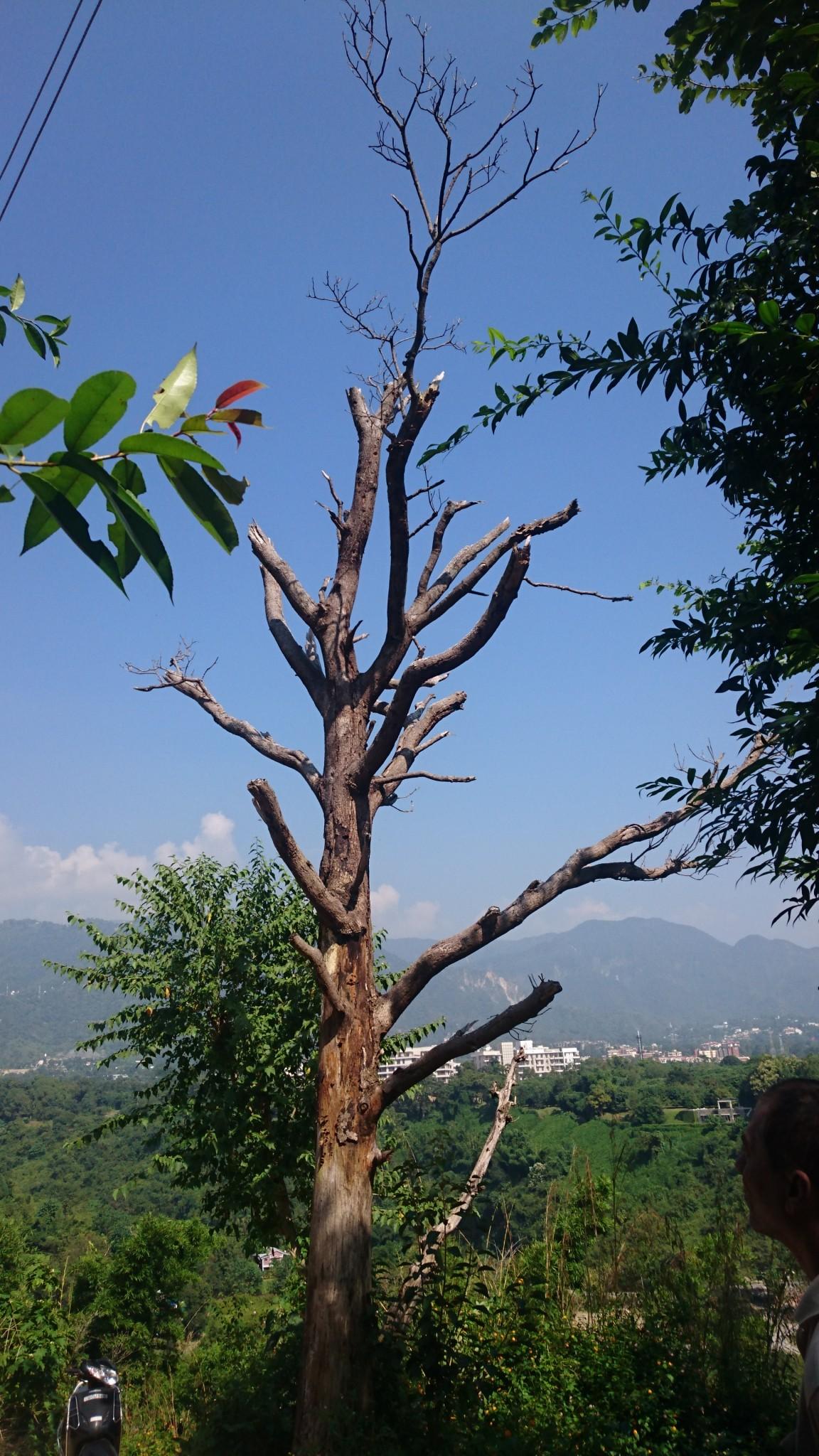 dehradun-nature-woodpecker-tree